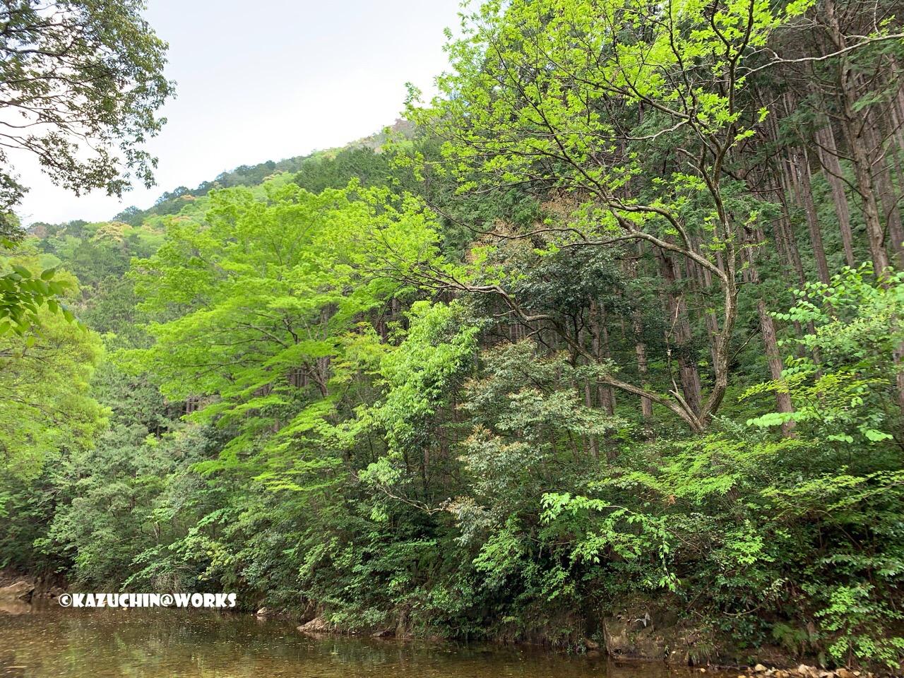 愛知県民の森 旅行記 プレ